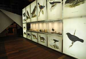 Exposición Vigo. Darwin. Navegando do Beagle