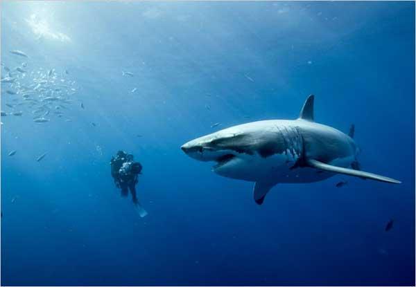 filmando un gran tiburón