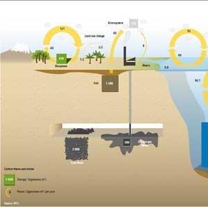 flujos del carbono y almacenamiento