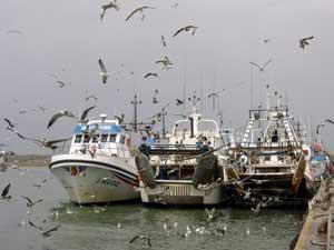 gaviotas junto a pesqueros