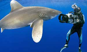 Gordon filmandoa un tiburón