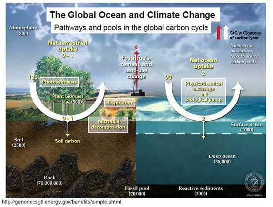 gráfico acidificación océanos por el cambio climático