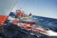 greenpeace, balleneros japoneses