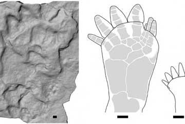 huellas fósiles de tetrápodos