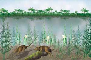 imagen del Paleoceno