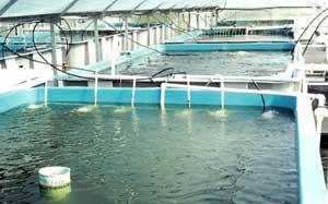 instalación de acuicultura