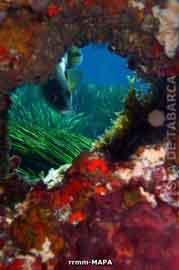 Fondos en la Isla de Tabarca con Posidonia Oceanica
