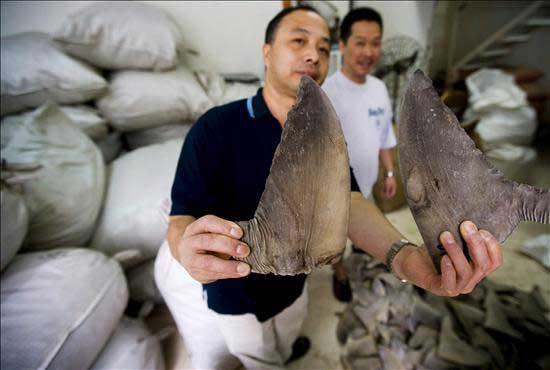 las aletas de tiburón a precio de oro