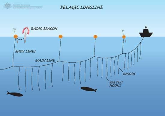 línea de pesca con palangre
