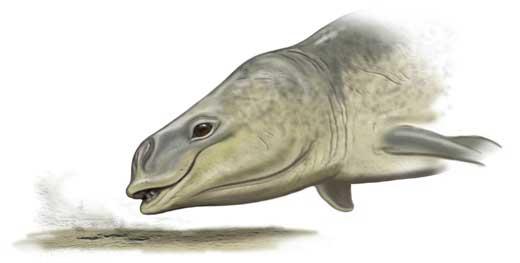 Mammalodon absorbe en el barro
