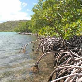 manglar sudeste de Asia