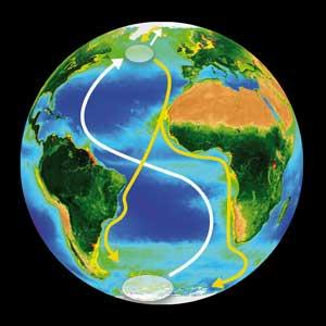mapa global rutas migración charrán ártico