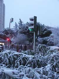 semaforo verde con hielo, nieve en Madrid, enero 2010