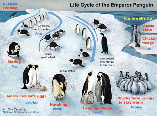 pingüinos emperador y el cambio climático