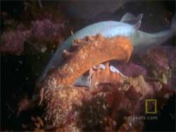 pulpo mata tiburón