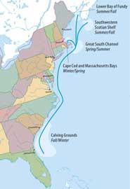 rutas de migración de las ballenas francas