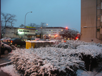 semaforos y plantas, nieve en Madrid - enero 2010