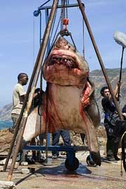 Gran tiburón blanco capturado Sudáfrica