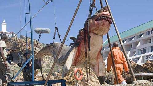 tiburón blanco capturado en Sudáfrica