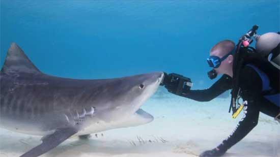 tiburón devora cámara de buzo