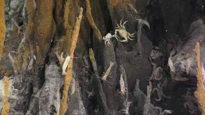 animales en una chimenea hidrotermal