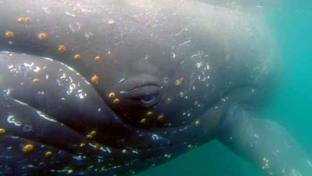 ballena filmada por la cámara