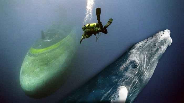 ballena y submarino