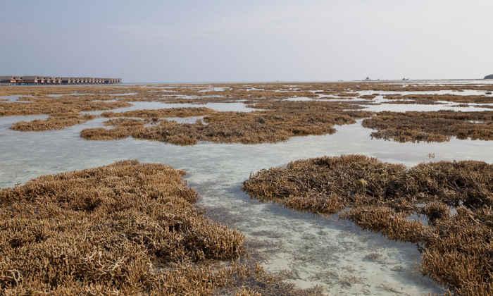 blanqueamiento de coral
