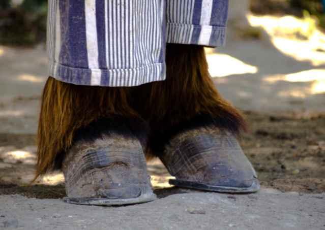 burro de Poitou en pijama, detalle