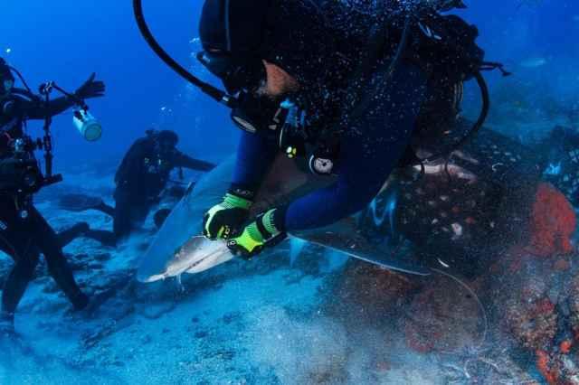 buzo desengancha un anzuelo de la boca de un tiburón