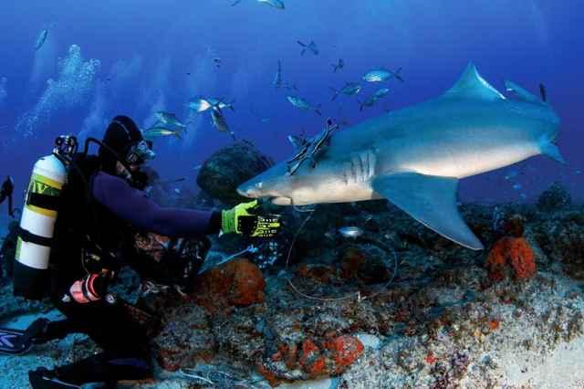 buzo con un tiburón con anzuelo en la boca