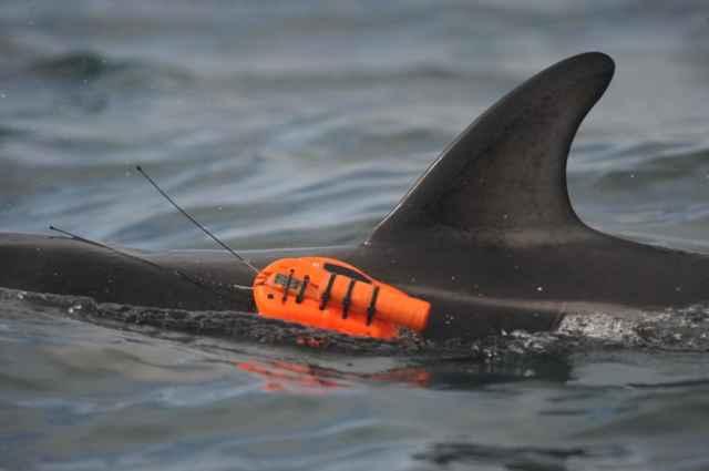 cámara adjunta a un delfín