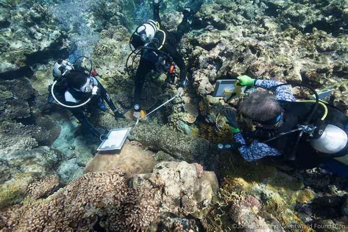 buzos inspecionan un cañon de un naufragio en Australia