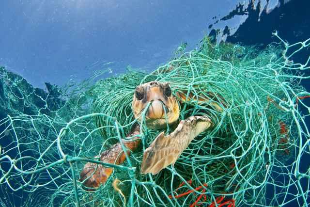 captura incidental de una tortuga marina