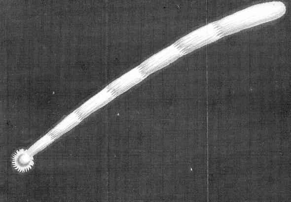 cometa de 1680