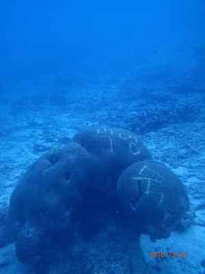 coral tallado en Tailandia