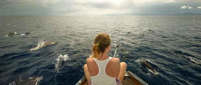 interacción delfines-humanos