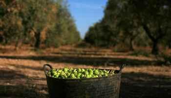 dieta mediterranea, aceitunas