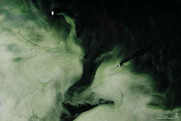 fitoplancton en la Antártida