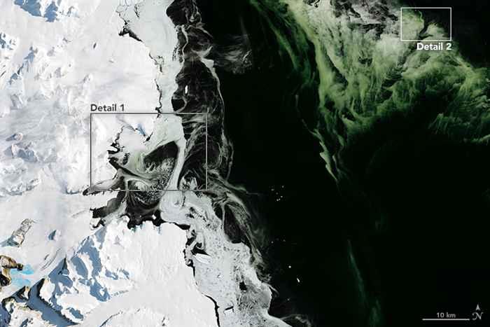 fitoplancton y hielo verde en la Antártida