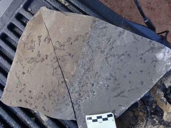 fósiles de escamas y camarones