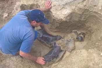 excavación de fósiles del Museo de Miramar