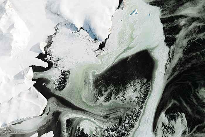 hielo marino verde en la Antártida