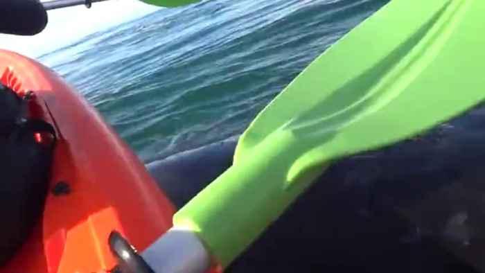 kayak levantado por ballena