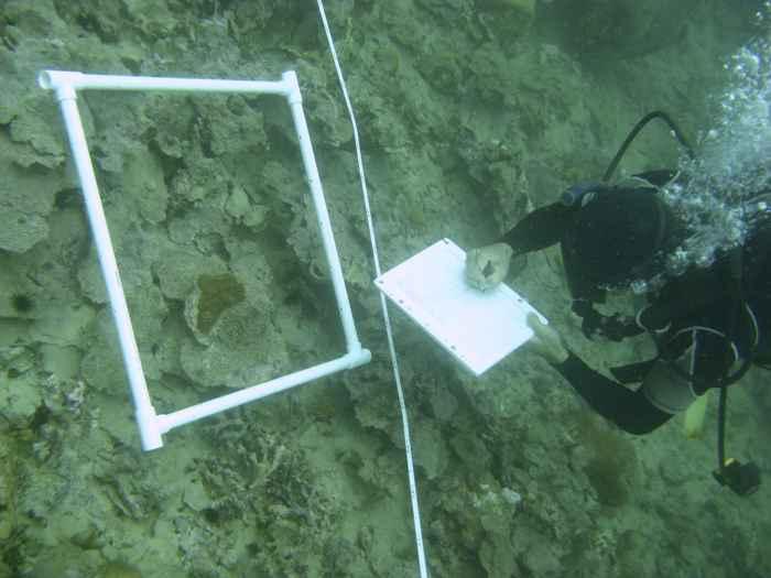 mortandad de coral en Panamá
