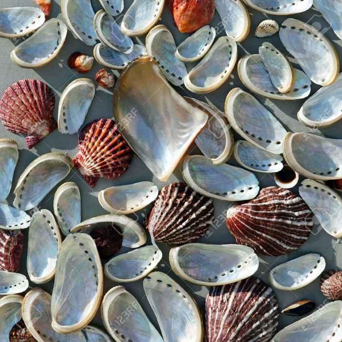 nácar en concha marinas