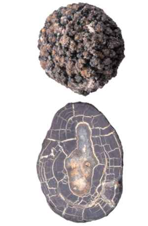 nódulo de manganeso
