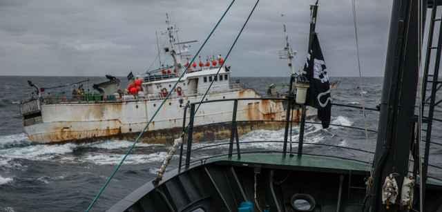 pesca ilegal de lubina chilena