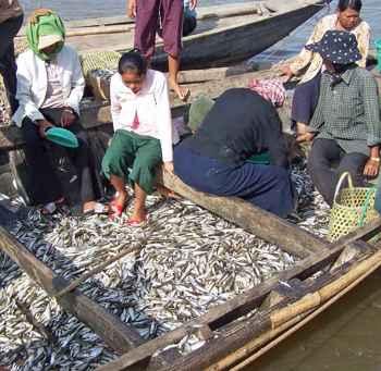 pesca en el lago Tonle Sap