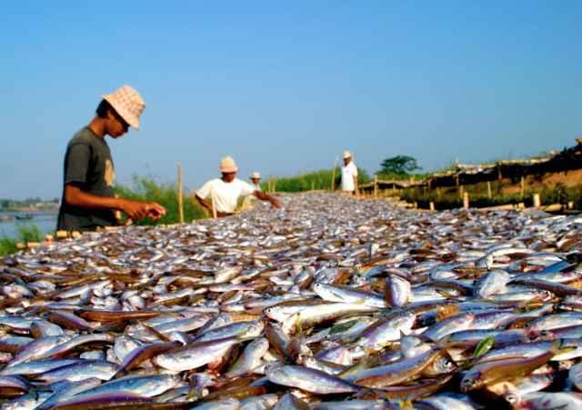 pesca del trey riel